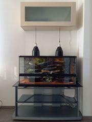 Terrarium inkl 3x Leopardgecko --