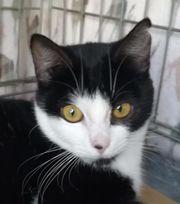 DAVINIA - Liebes Katzenmädchen wartet auf