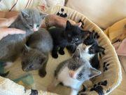 Kittens zu verkaufen