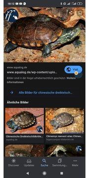 Biete Süßwasserfische und Schildkröte