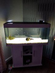 Aquarium JUVEL