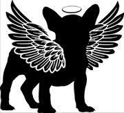 Suchen Französische Bulldogge