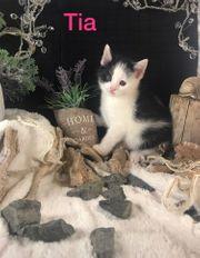Katzenbabys suchen liebevolles Zuhause