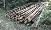 Holzlatten für Pfähle oder Bohnenstangen