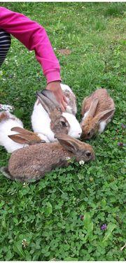 Die Kaninchenmama mit 3 Kaninchenkindern