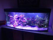 Aquarium Komplett oder einzelne Positionen