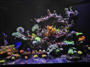 Tausche verkaufe Korallen Sps Lps