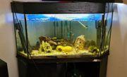 trigon aquarium