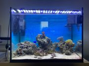 Meerwasser Aquarium ca 86Liter