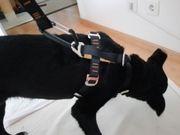 Hunde-Geschirr für sicheres Anleinen im