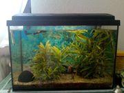 Aquarium ca 72 Liter