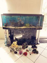 Aquarium 300 liter mit gewölbter