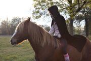 Schöner Spanier-Mix Pony Wallach zu