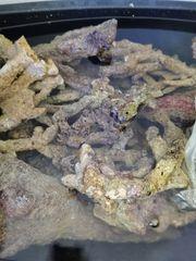 Meerwasser Real Reff Rock Äste