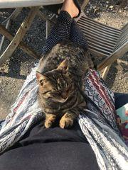Tigerkatze in Fraxern Orsanka vermisst