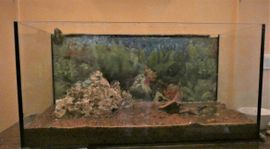 Fische, Aquaristik - Aquarium komplett mit Fische