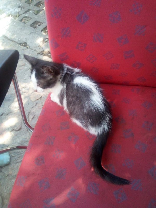 Katze Baby Kitte Welpe