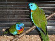 Großer Madeira Vogelkäfig mit Glanzsittiche