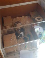 Meerschweinchenkäfig Stall Gehege Auslauf Käfig