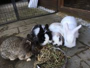 Kaninchen -Familie sucht liebevolles zuhause