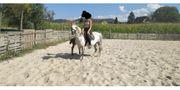 Traumpferdchen Ponystute mit Stutfohlen bei