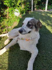 Fenja - Tolles Hundemädchen möchte ein