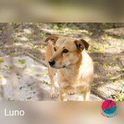 Luno - Verträumte Seele sucht liebevolles