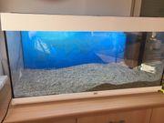 Juwel Aquarium 160 l weiß