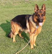 Wach und Schutzhund