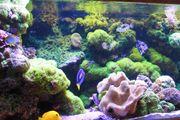 Korallen verschiedene Sorten