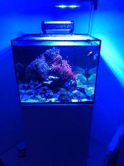 Red Sea Reefer 170 mit