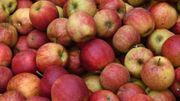 Frische Bio Äpfel