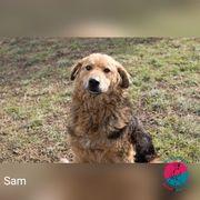 Sam - Auf der Suche nach