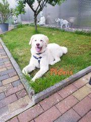 Phönix Traumhund sucht ein Zuhause