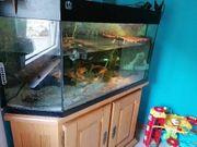 Aquarium mit Zubehör und Besatz
