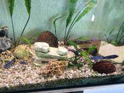 schönes Aquarium L 150 H