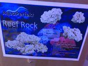 Reef Rock Meerwasser Korallen