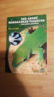 Buch der große Madagaskar Taggecko