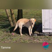 Tamme - Angekratzte Frohnatur