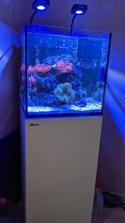 Meerwasseraquarium Nano Red Sea