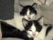 Kitten suchen neues zu Hause