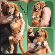 Wunderschöner Rüde Athos 6 Monate