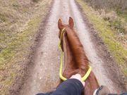 Coaching Training Bodenarbeit mit Pferden