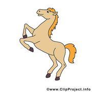 Suche nette Pflegebeteiligung Pferde suchen