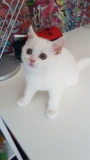 BKH Mädchen Kitten 07 06