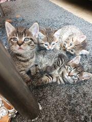 3 Kitten suchen Dosenöffner auf