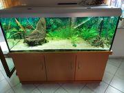 680 L Aquarium komplett