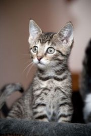 Weibliches Katzenbaby zum 02 04