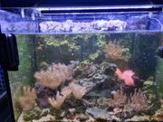 Verkaufe Meerwasseraquarium