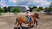 Bildhübsche Pony Stute Welsh B